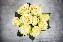 Bright yellow roses Royalty Free Stock Photo