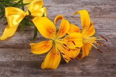 Bouquet of bright yellow flowers lilies with a nice bow Royalty Free Stock Image