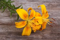 Bouquet of bright yellow flowers lily Stock Photography