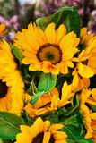 A bouquet from bright yellow sunflowers at the flower market. stock photo