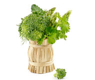 Bouquet of broccoli, asparagus, dill, parsley. In wicker basket isolated on white background Royalty Free Stock Photo