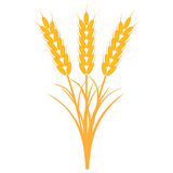 Bouquet bunch of ears of wheat with the stems and leaves of ripe yellow color, vector the concept of the harvest of crops Royalty Free Stock Images