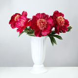 Bouquet of burgundy peonies Royalty Free Stock Photos