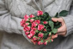 Bouquet of bush of roses in female hands on a background royalty free stock photo
