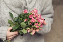 Bouquet of bush of roses in female hands on a background stock image