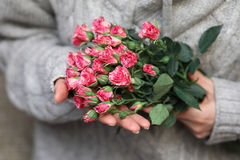 Bouquet of bush of roses in female hands on a background stock photography