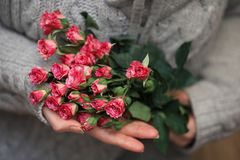 Bouquet of bush of roses in female hands on a background royalty free stock photos