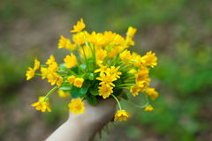 Bouquet of buttercups Stock Photography