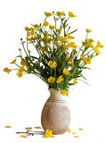 Bouquet of buttercups. In a vase on a white background Stock Image