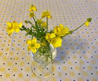 Bouquet of buttercups Stock Photos