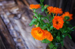 Bouquet of calendula Calendula officinalis L. on vintage woode Royalty Free Stock Images