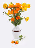 Bouquet of calendula flowers in a white vase. On the white background Royalty Free Stock Photo