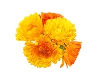 Bouquet of calendula Stock Photo
