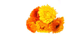 Bouquet of calendula Royalty Free Stock Images