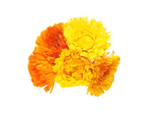 Bouquet of calendula Royalty Free Stock Photo