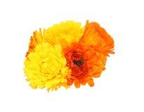 Bouquet of calendula Stock Photography
