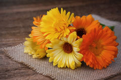 Bouquet of calendulas on canvas on wooden background Royalty Free Stock Images