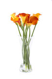 Bouquet Calla Royalty Free Stock Image