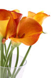 Bouquet Calla Royalty Free Stock Images