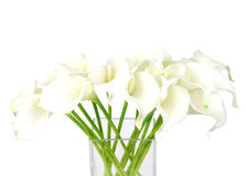 Bouquet of calla lilies in a glass vase Stock Images