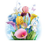 Bouquet of Calla lilies and irises Royalty Free Stock Image