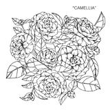 Bouquet of Camellia flower drawing and sketch. Royalty Free Stock Photos