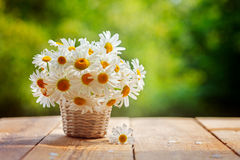 Bouquet of camomile flowers on wood table in nature green backgr Stock Photography