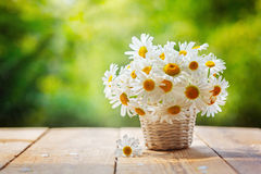 Bouquet of camomile flowers on wood table in nature green backgr Stock Image