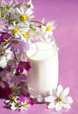 Bouquet  camomile and milk Royalty Free Stock Photo