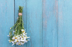Bouquet of camomile on a old blue wooden background Stock Photography