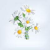 Bouquet camomile with ribbon. Greeting card with beautiful flowers Royalty Free Stock Photography
