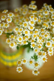Bouquet of camomile on a table Royalty Free Stock Photography