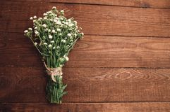 Bouquet of chamomiles. Bouquet of camomile on a wooden table Stock Image