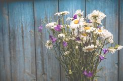 A bouquet of camomiles Stock Photography