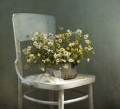 Bouquet of camomiles and chair Royalty Free Stock Photo