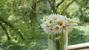 Bouquet of camomiles in a glass vase on the window. The petals of the daisy flowers move from the summer wind. Overall stock video