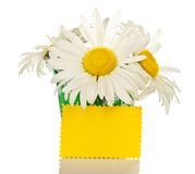 Bouquet of camomiles in little bucket and yellow Stock Images