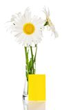 Bouquet of camomiles in vase and yellow blank card Royalty Free Stock Image