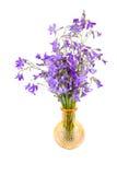 Bouquet of Campanula Stock Photo