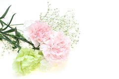 Bouquet of carnation and babys breath Stock Images