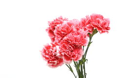 Bouquet of carnation Royalty Free Stock Image
