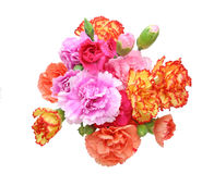 Bouquet of carnation Stock Photo