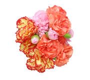 Bouquet of carnation Stock Photos