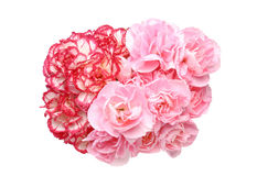 Bouquet of carnation Royalty Free Stock Images