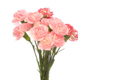 Bouquet of carnation Royalty Free Stock Photo
