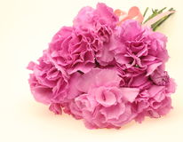 Bouquet of carnation Royalty Free Stock Photography