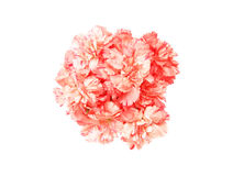 Bouquet of carnation Royalty Free Stock Photos