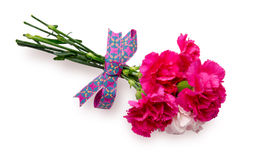 Bouquet of carnation with a ribbon Royalty Free Stock Photos