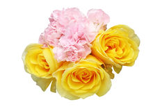 Bouquet of carnation and rose Royalty Free Stock Photo