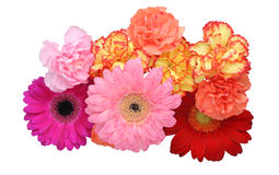 Bouquet of carnation and transvaal daisy Stock Image